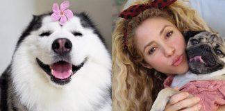 popular dogs on instagram