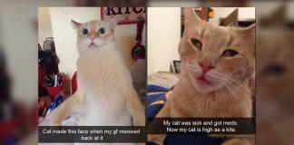 cat Snapchats