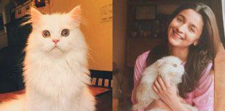 cat obsessed Alia Bhatt