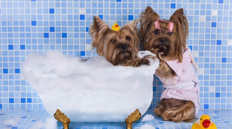 pet grooming salons