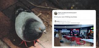 airport pigeon