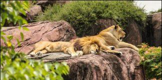world's largest Zoo